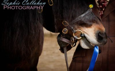 My 3 Top Equestrian Event Photography Tips for Beginners