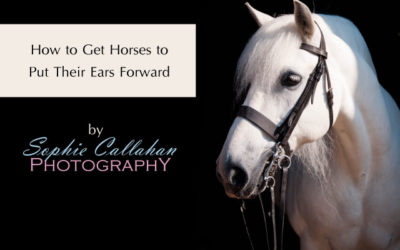 How to Get Horses to Put Their Ears Forward for Their Photoshoot