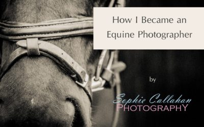How I Became an Equine Photographer