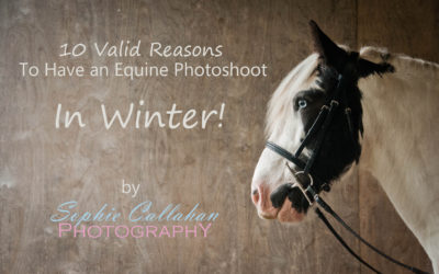 10 Valid Reasons To Have an Equine Photoshoot in Winter!