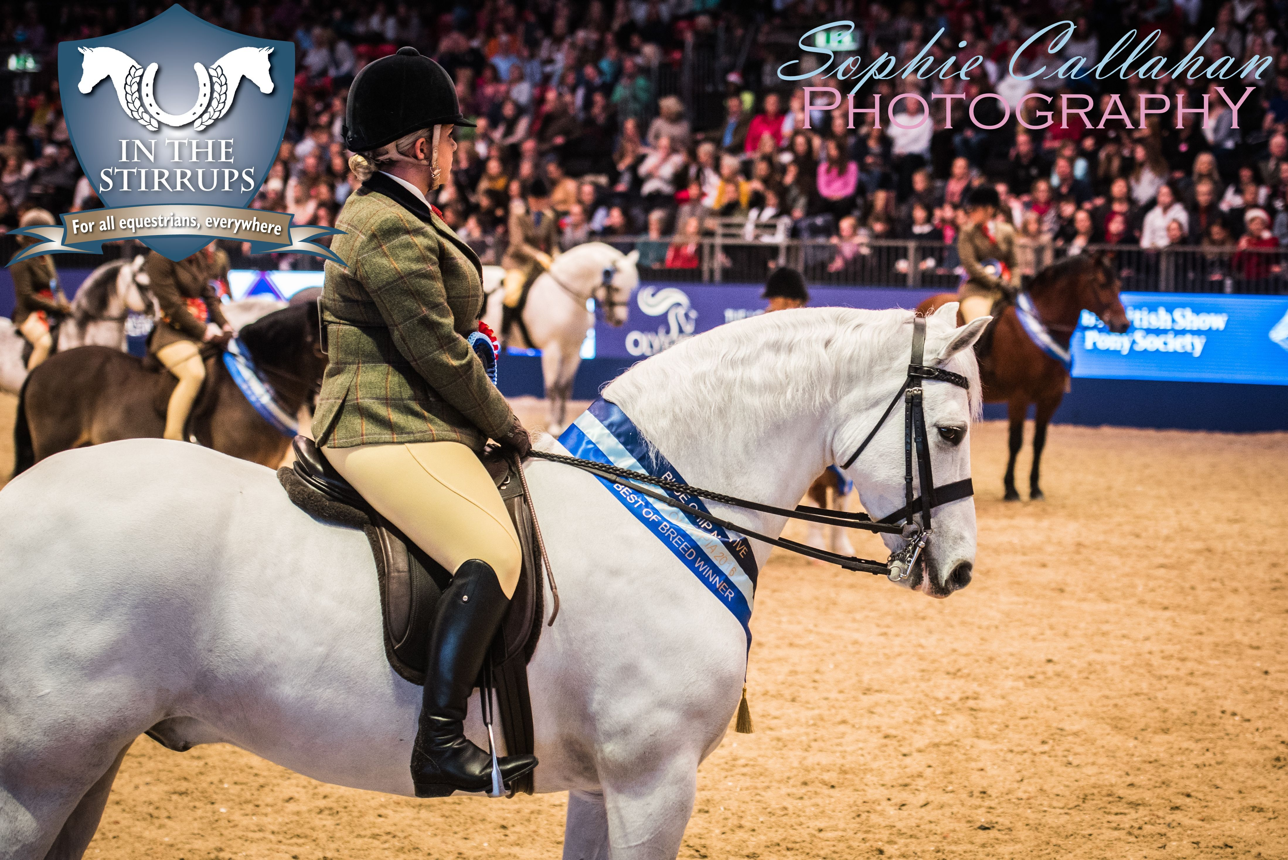 BSPS Heritage Mountain and Moorland Championship Final, Olympia 2016, by Specialist UK Equine Portrait Photographer, Essex I equine photography equine blogger
