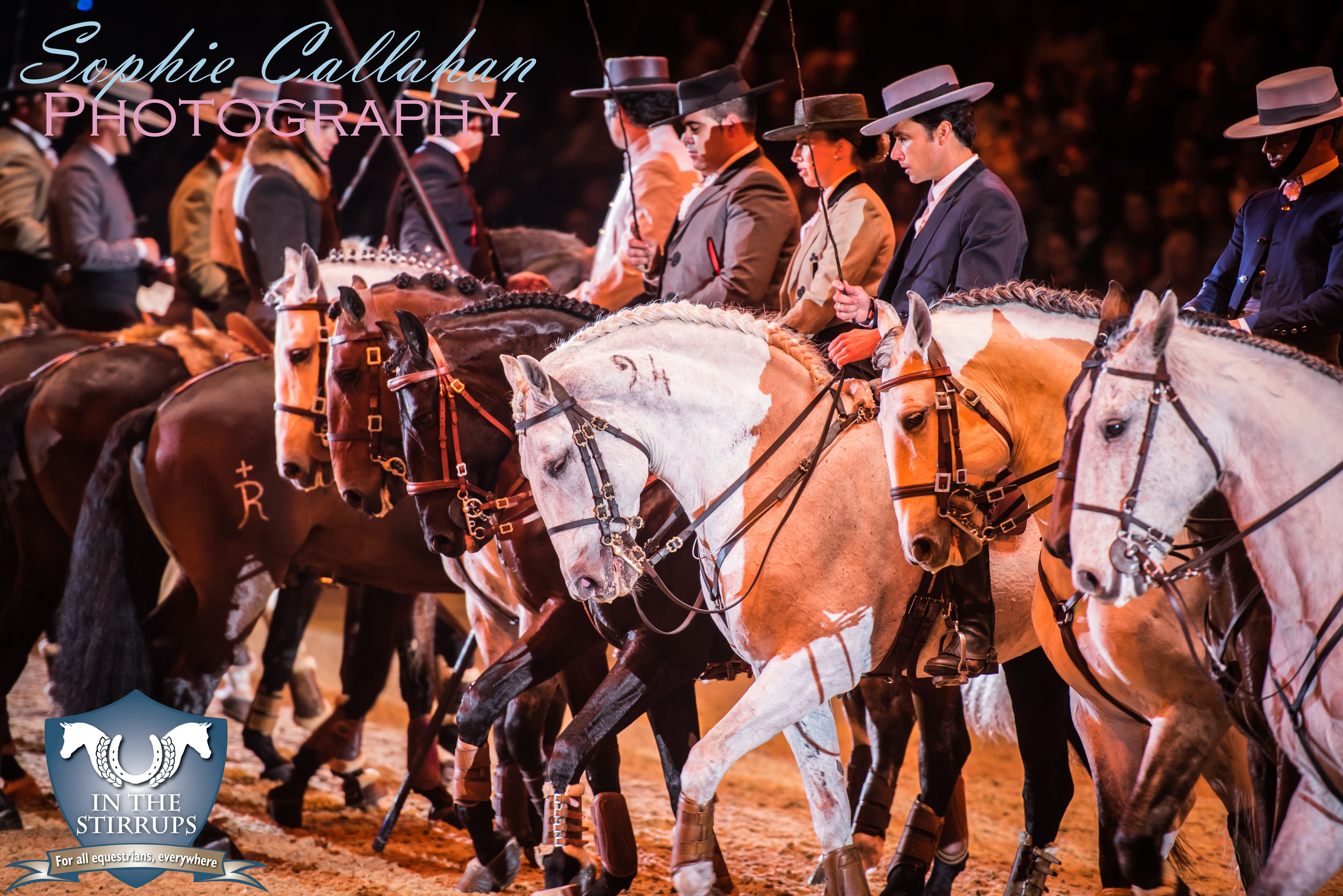Pride of Portugal, Olympia 2016, by Specialist UK Equine Portrait Photographer, Essex I equine photography equine blogger