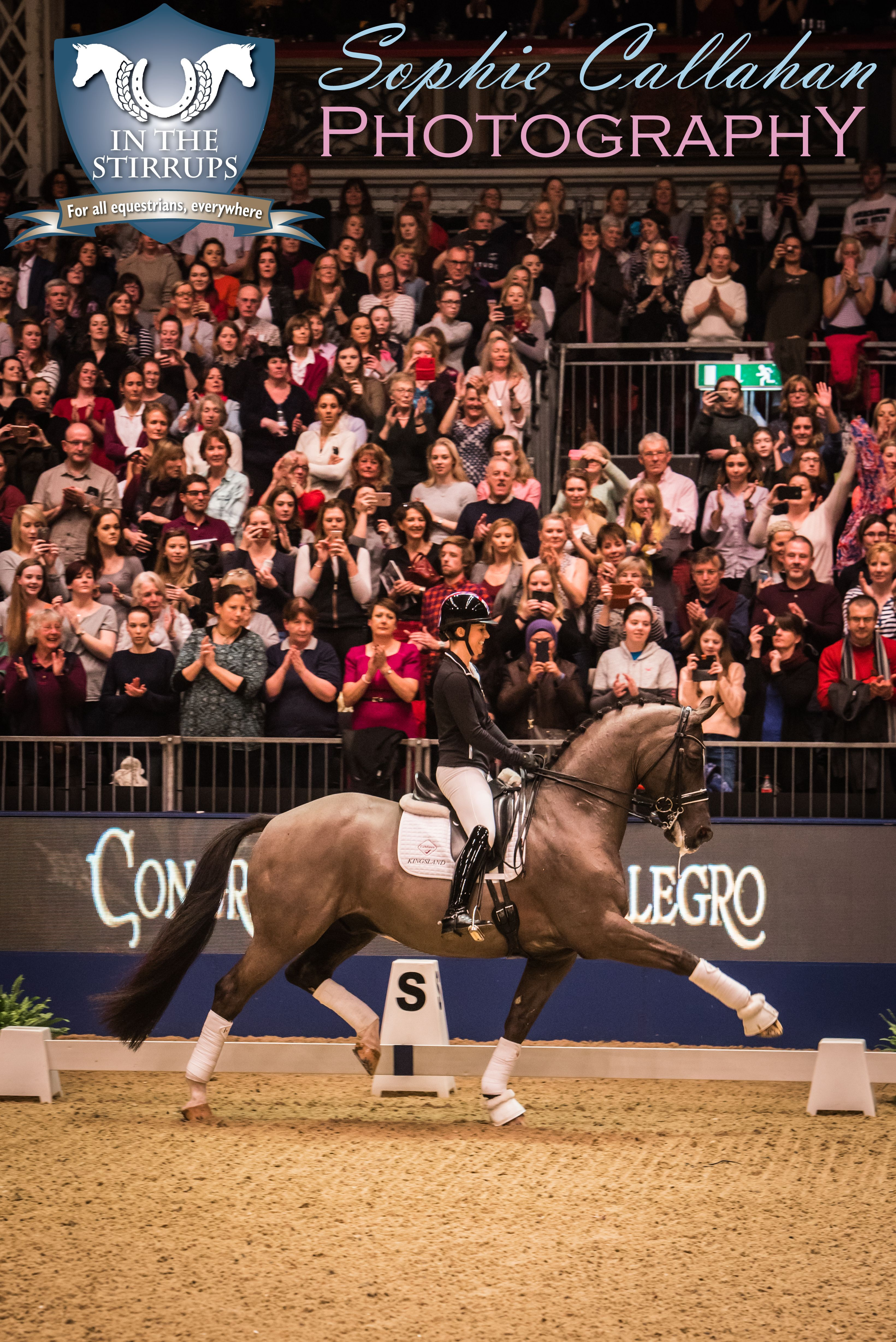 Valegro at Olympia 2016, by Specialist UK Equine Portrait Photographer, Essex I equine photography equine blogger