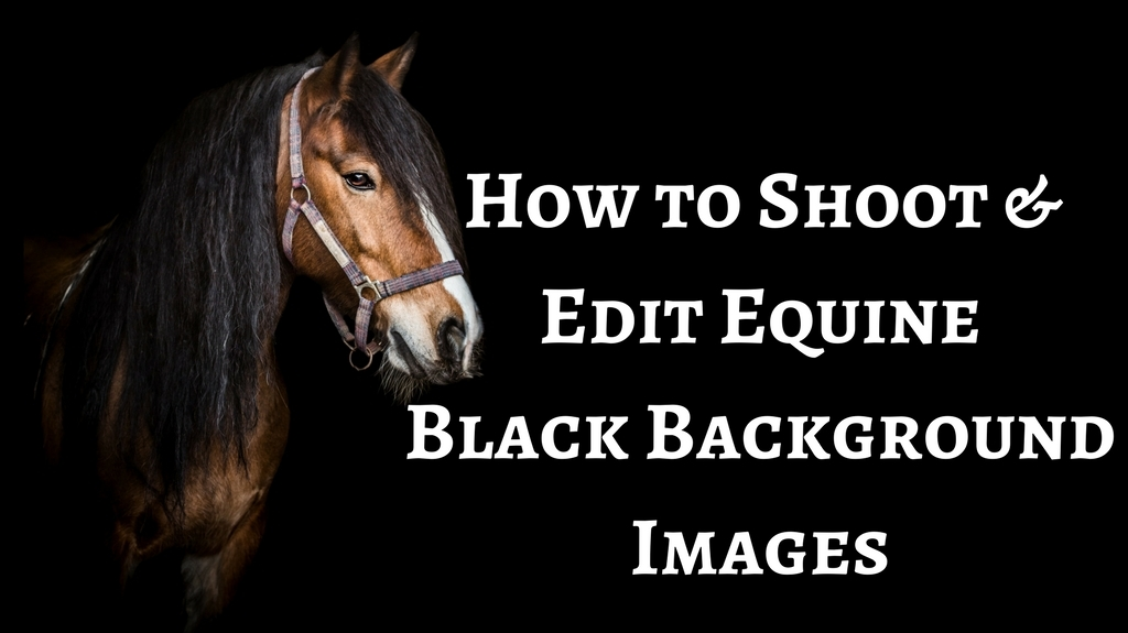 Black Background Shots - by Specialist UK Equine Portrait Photographer, Essex I via sophiecallahanblog.com I #equinephotography #photography #equineblogger