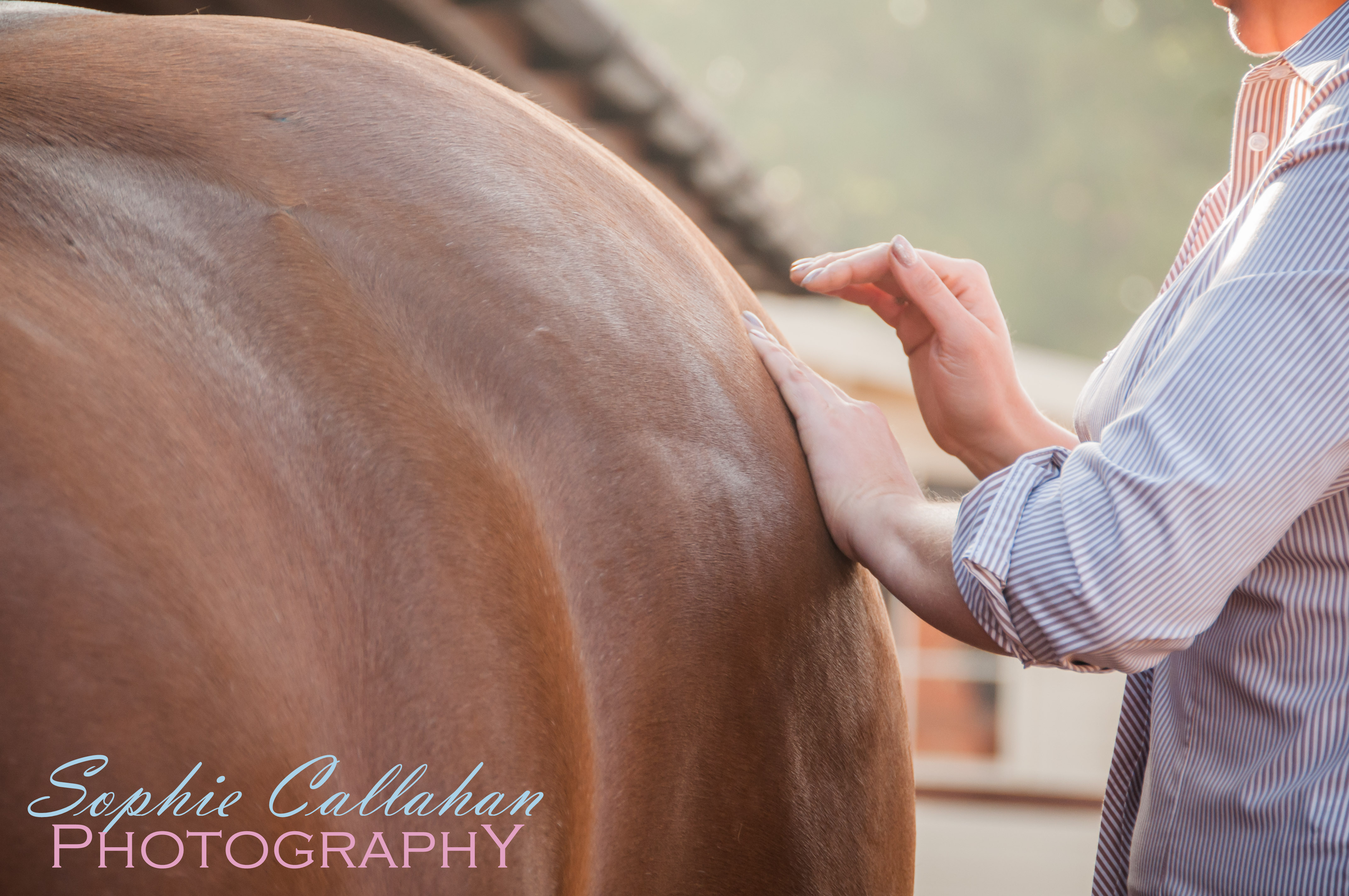 Using Facebook For Your Equine Business, with Specialist UK Equine Portrait Photographer I via sophiecallahanblog.com I #equinephotography #photography #equineblogger