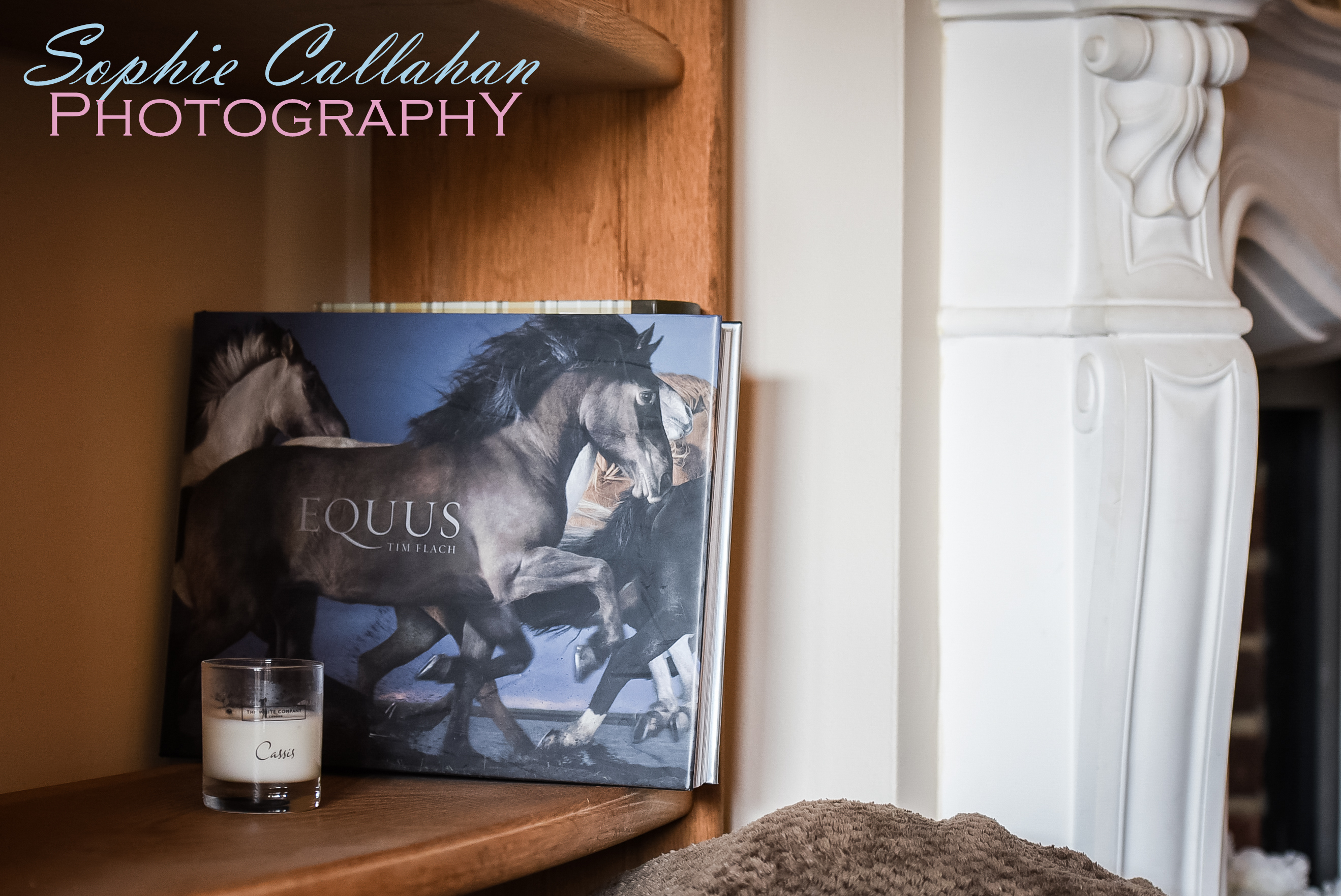 January Favourites, by Specialist UK Equine Portrait Photographer I via sophiecallahanblog.com I #equinephotography #photography #equineblogger