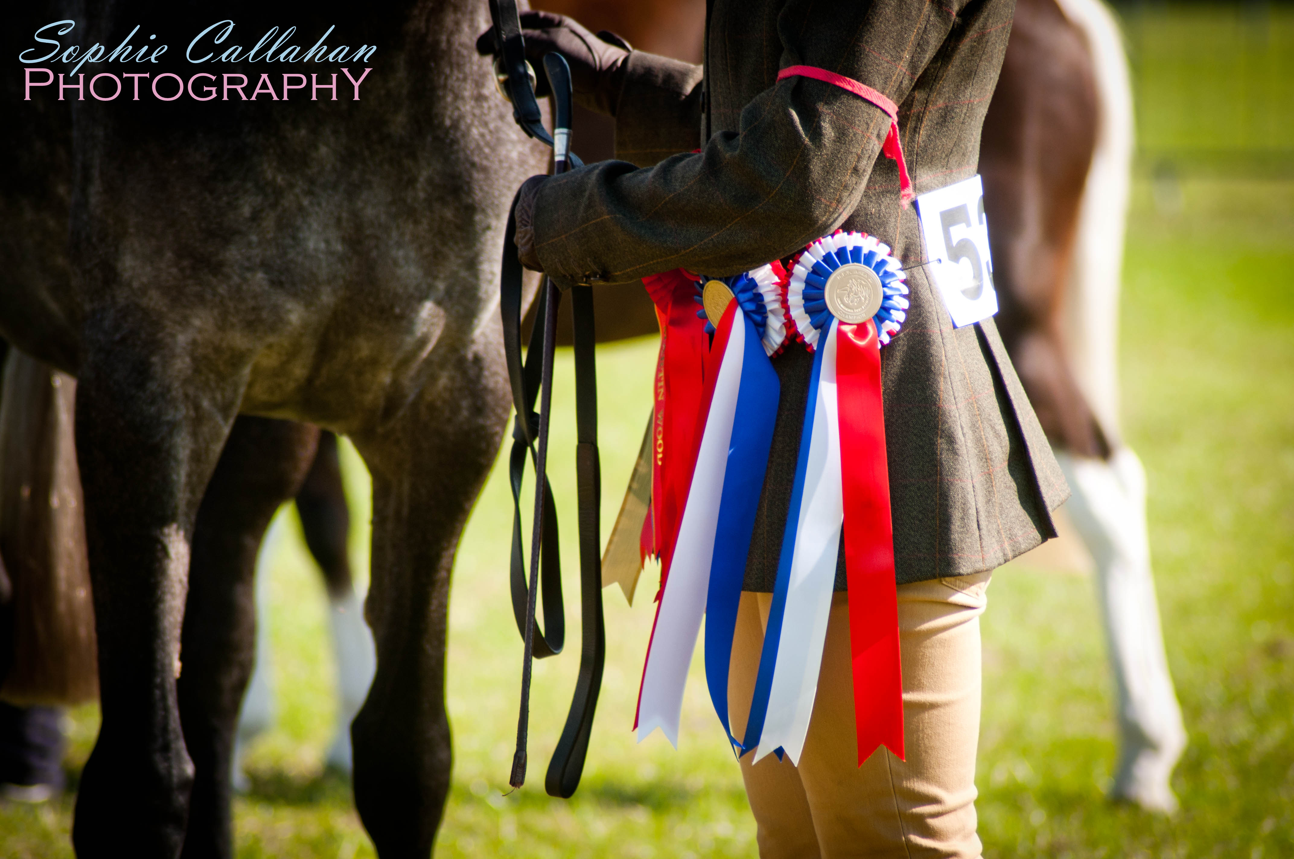 Promoting Your Equine Business, by Rhea Freeman PR I via sophiecallahanblog.com I #equinephotography #photography #equineblogger