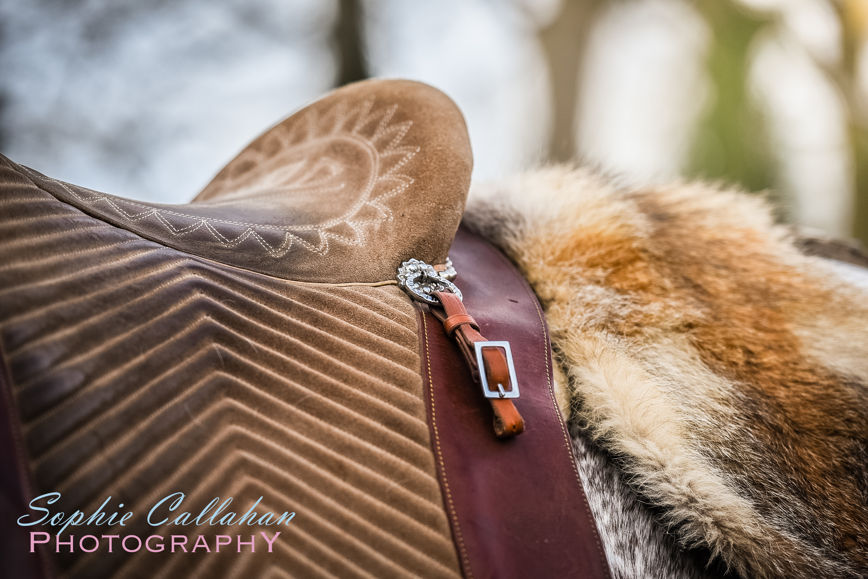 Sharing Your Business Secrets - I via sophiecallahanblog.com I #equinephotography #photography #equineblogger