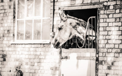 Why Promoting Your Equine Business is so Important – Guest Blog by Rhea Freeman PR – FYI FRIDAY