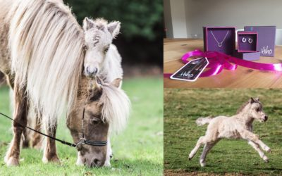 WEEK-OLD MINIATURE HORSE FOAL – Weekly Vlog #31