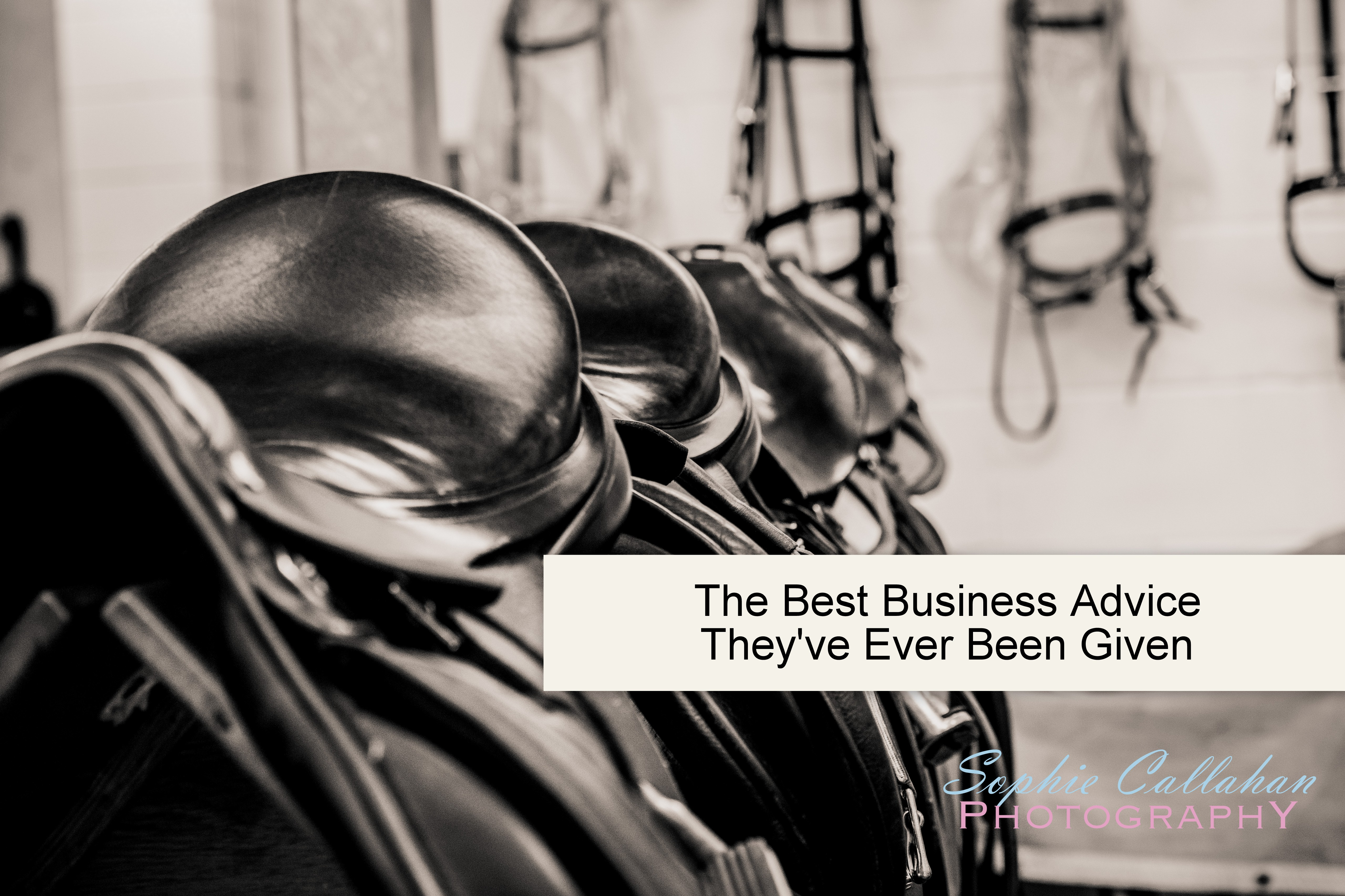 The Best Business Advice They've Ever Been Given I via sophiecallahanblog.com I #equinephotography #photography #equineblogger