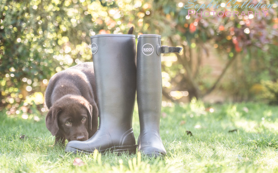 Rudds Wellies, Crafted to Work – A Review