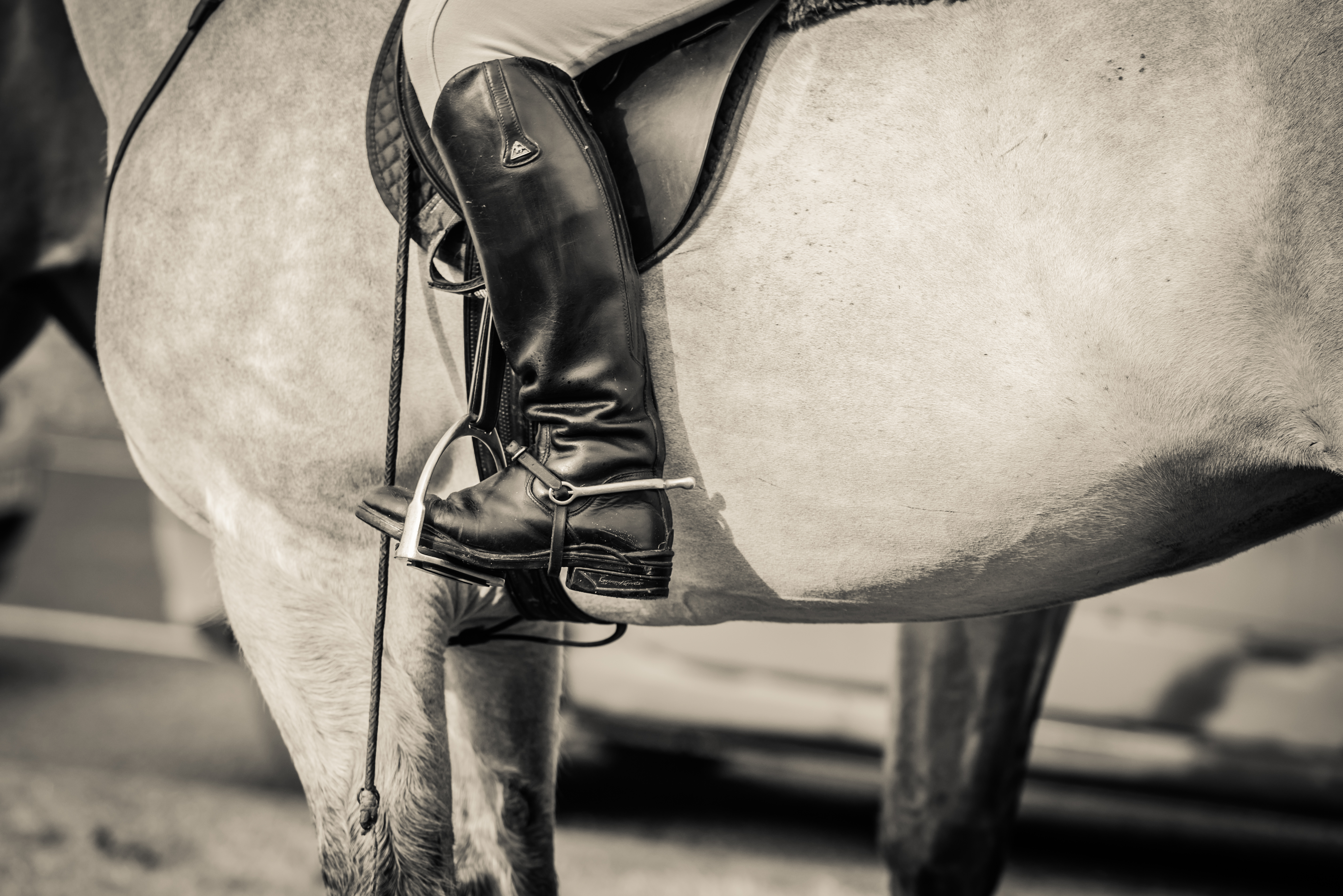 Should You Be Blogging for Your Equine Business? - FYI FRIDAY - Sophie Callahan Blog