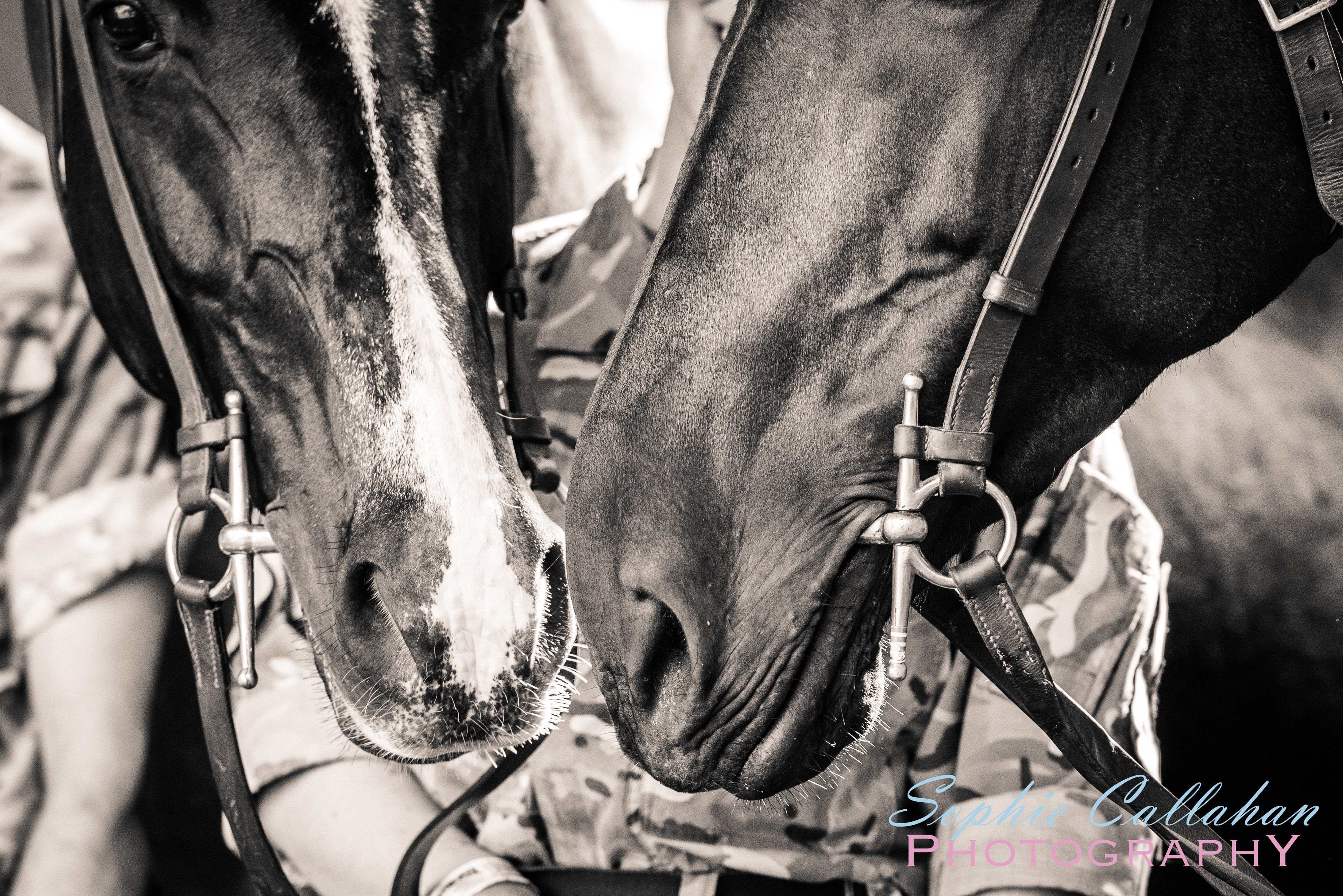 Kings Troop Royal Horse Artillery, by Katie Mortimore Photography I via sophiecallahanblog.com I #equinephotography #photography #equineblogger