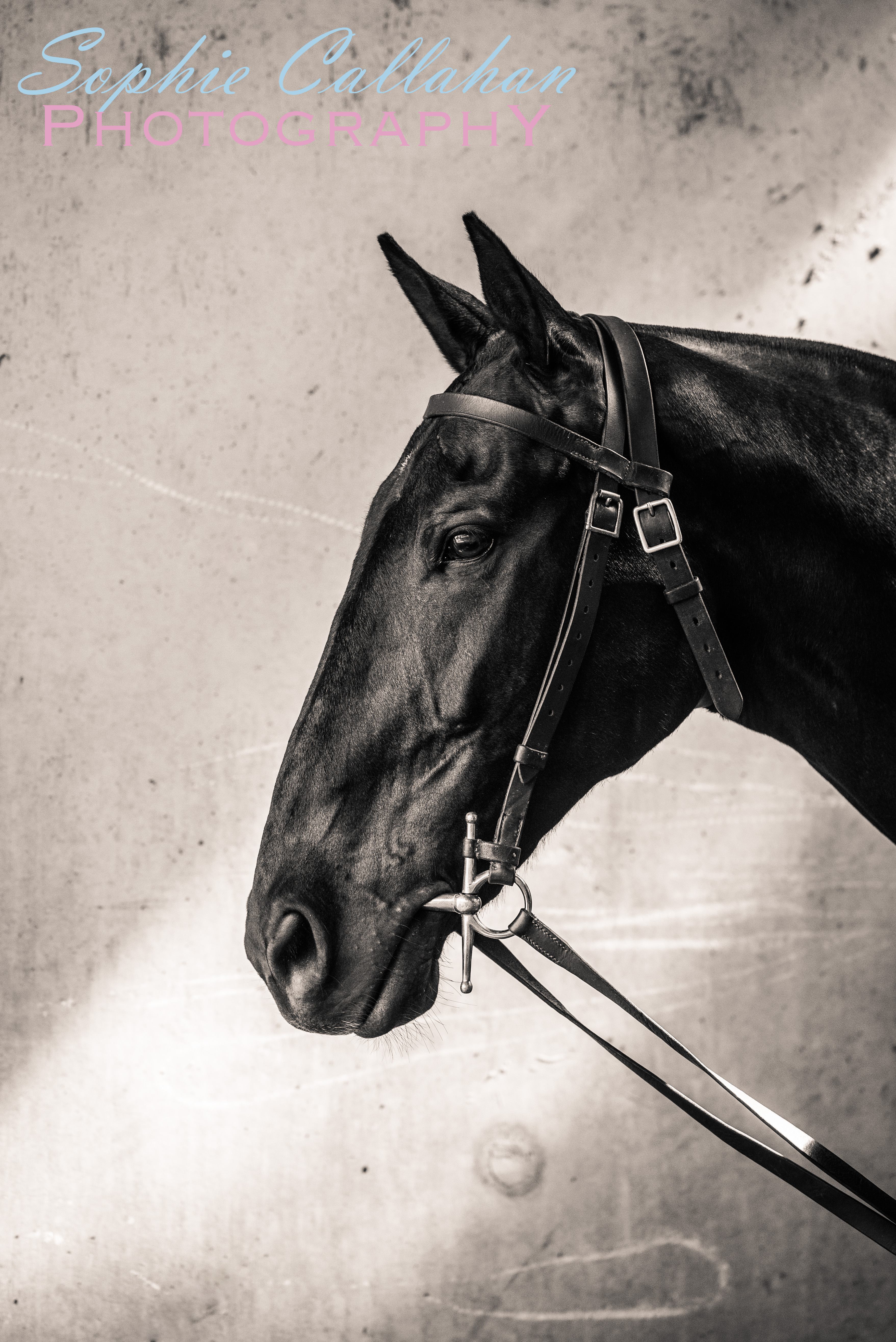 Kings Troop Royal Horse Artillery, by Specialist UK Equine Portrait Photographer, Hertfordshire I via sophiecallahanblog.com I #equinephotography #photography #equineblogger