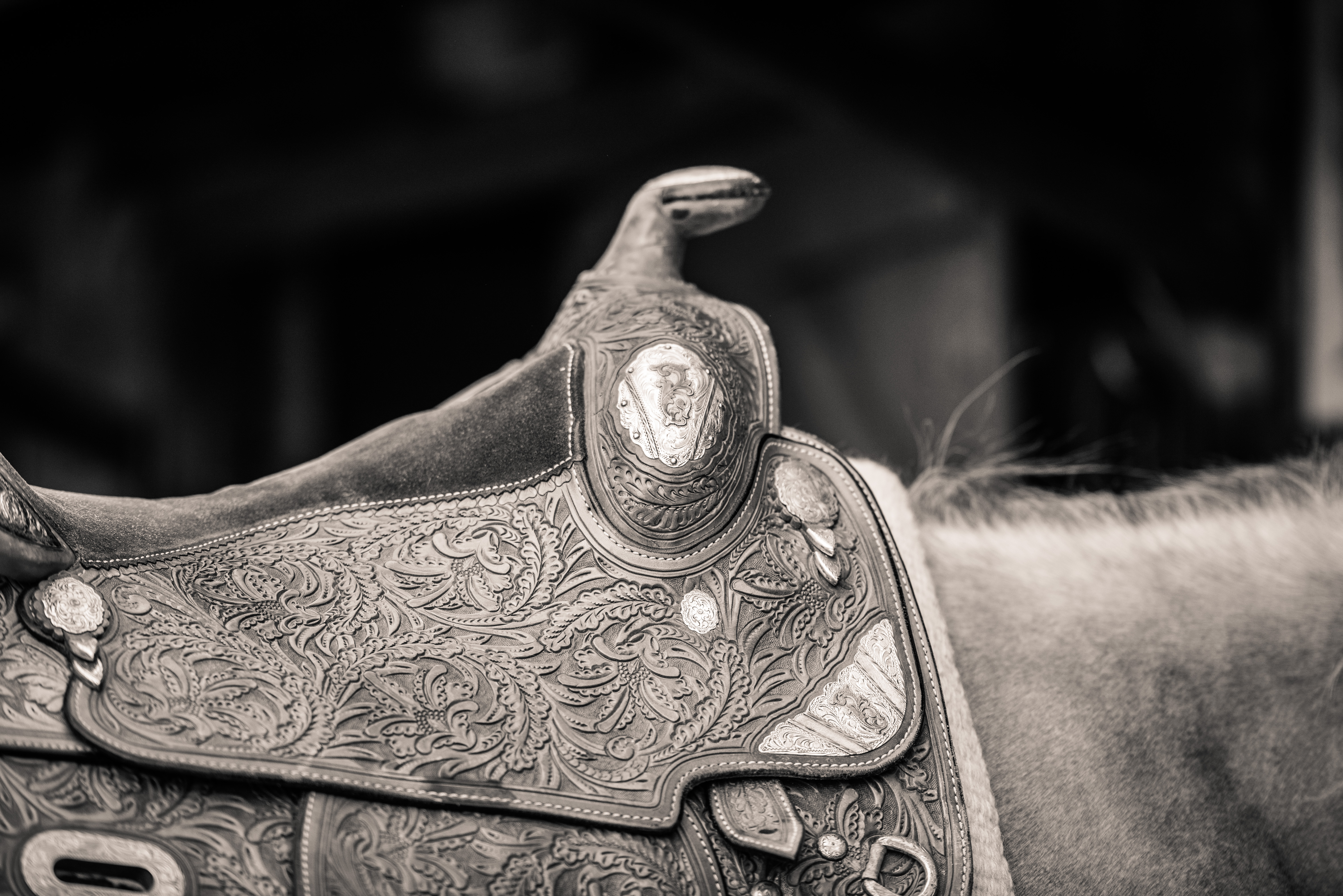 Finding & Attracting Your Ideal Client I via sophiecallahanblog.com I #equinephotography #photography #equineblogger