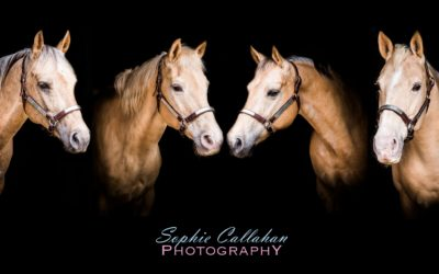 Joanna, Cally, Maisie, Tilly & Pepper – Equine Photography, Essex