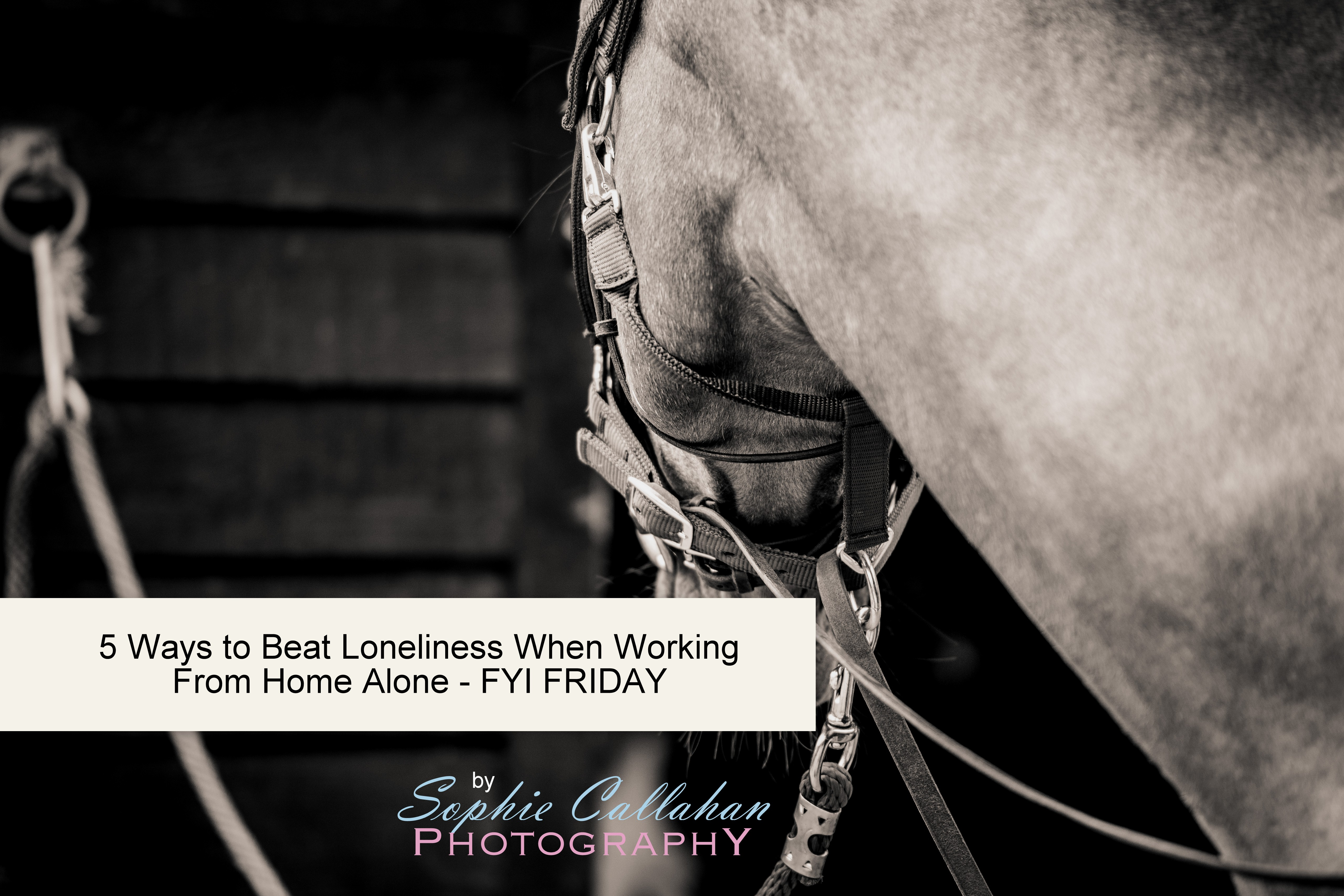5 Ways to Beat Loneliness When Working From Home Alone, by Specialist UK Equine Photographer I via sophiecallahanblog.com I #equinephotography #photography #equineblogger