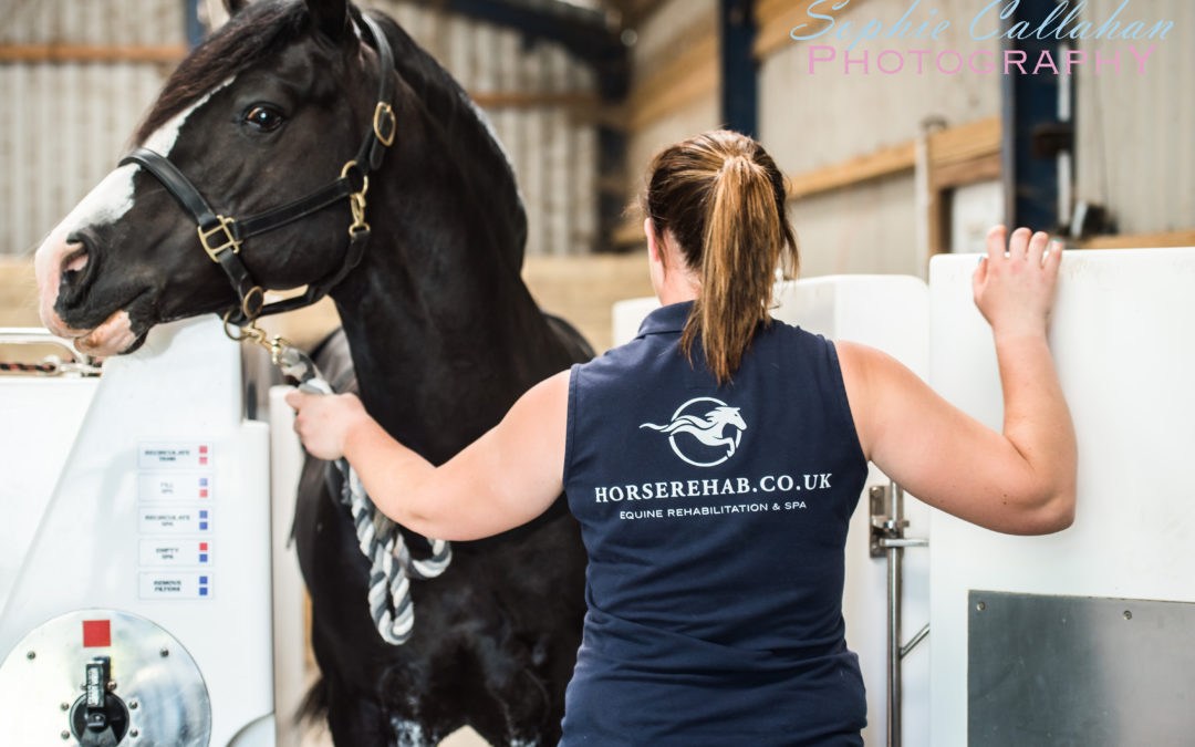 Behind the Business: Priory Farm Equine Spa and Rehab Centre