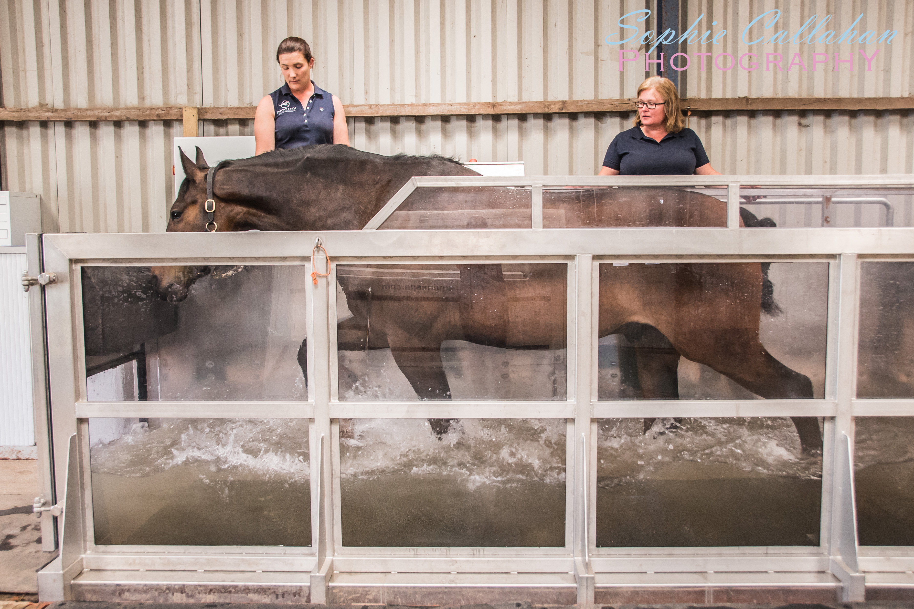 Commercial Equine Business Photography, of Priory Farm Equine Spa and Rehab Centre, by Specialist UK Equine Photographer I via sophiecallahanblog.com I #equinephotography #photography #equineblogger