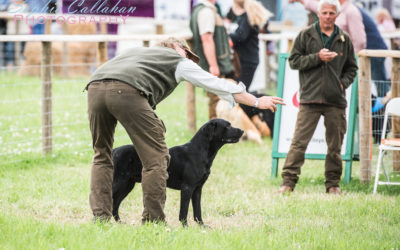 My First Visit to The Game Fair (Spoiler: I Loved It!)