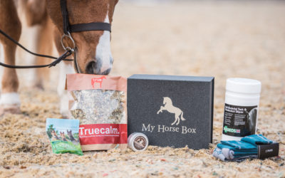 Behind the Business: My Horse Box (And A Discount Code For You!)
