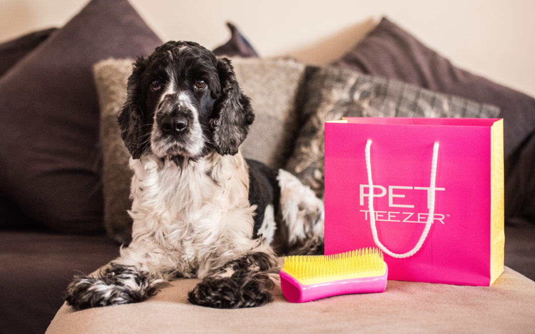 Barney's First (& Possibly Last) Ever PR Event, with Pet Teezer