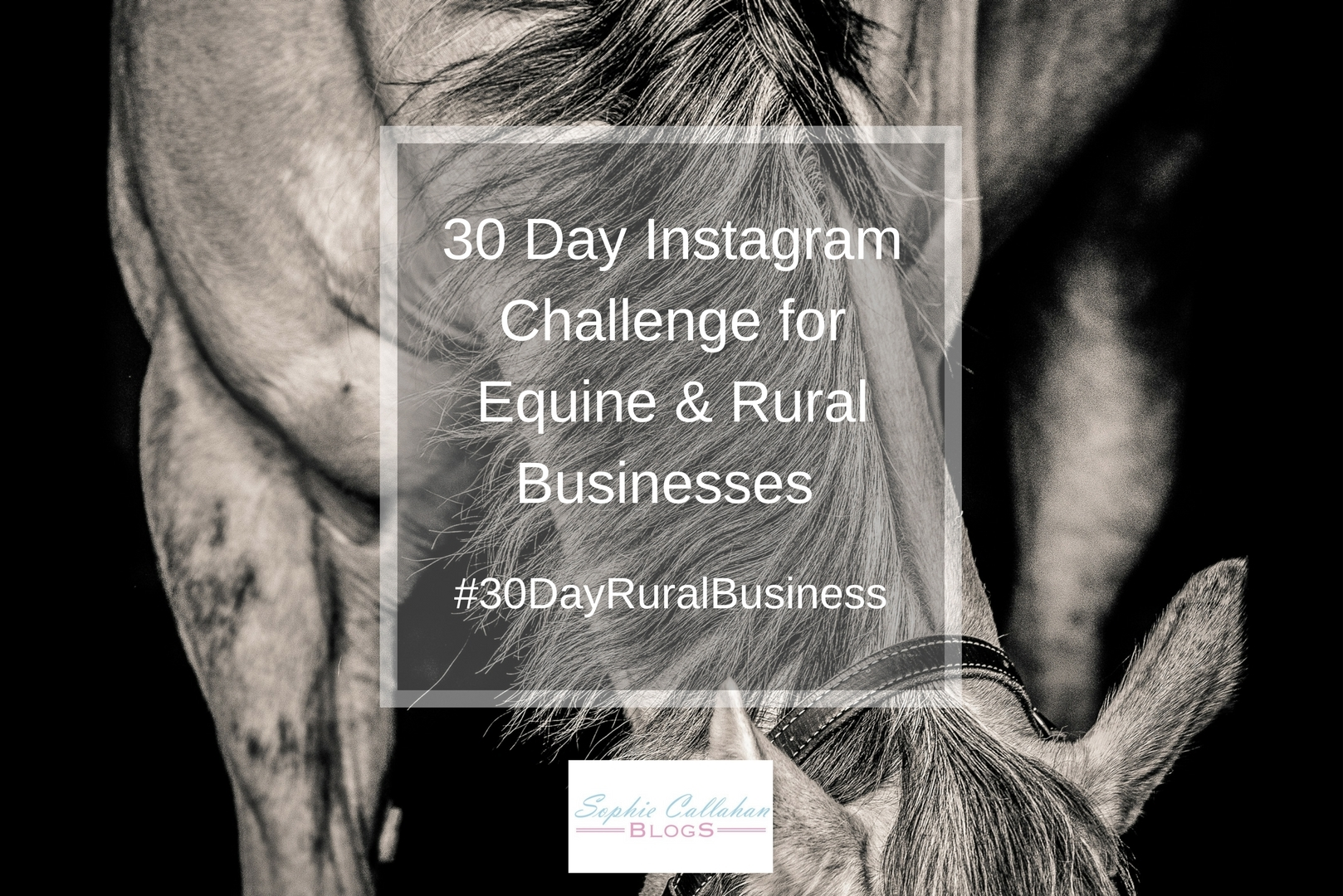 30 Day Instagram Challenge for Equine & Rural Businesses #30DayRuralBusiness - Equine Photographer and Country Lifestyle Blogger I via sophiecallahanblog.com I #lifestyleblogger #photography #countrylife