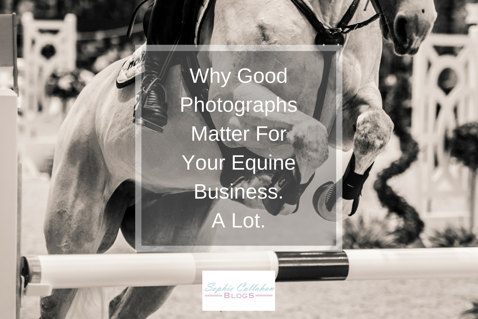 Why Good Photographs Matter For Your Equine Business, with Rhea Freeman - Equine Photographer and Country Lifestyle Blogger I via sophiecallahanblog.com I #lifestyleblogger #photography #countrylife